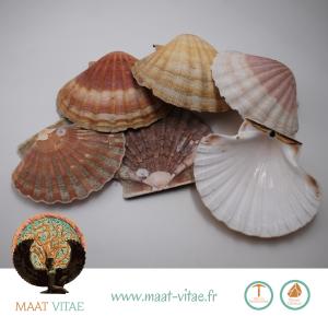 Coquilles St Jacques naturelles bretonnes- Pierres naturelles et équitables de notre partenaire Maât Vitae - www.maat-vitae.fr