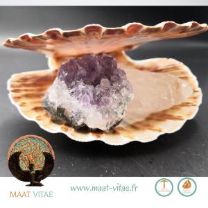 Coquille St Jacques entière - Pierres naturelles et équitables de notre partenaire Maât Vitae - www.maat-vitae.fr