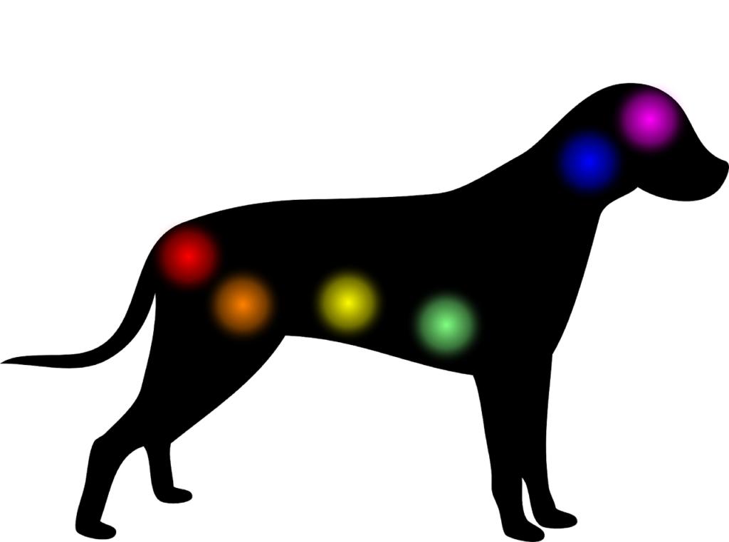 Soins Reiki pour chien - Soins Reiki à distance pour animaux